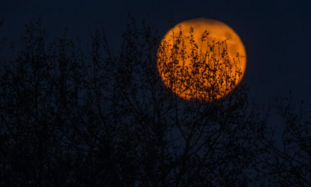 Try This One-Day Water Fast for the Halloween Full Moon